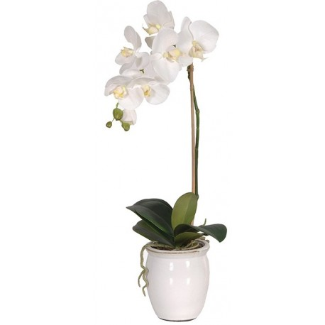Kwiat WHITE ORCHID