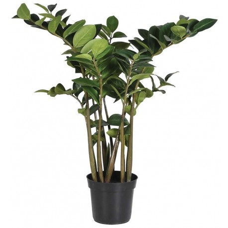 Zielona roślina ozdobna w doniczce ZAMIOCULCAS